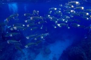 春時期も水中はお魚がいっぱい