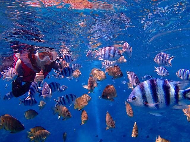 熱帯魚がいっぱいの真栄田岬