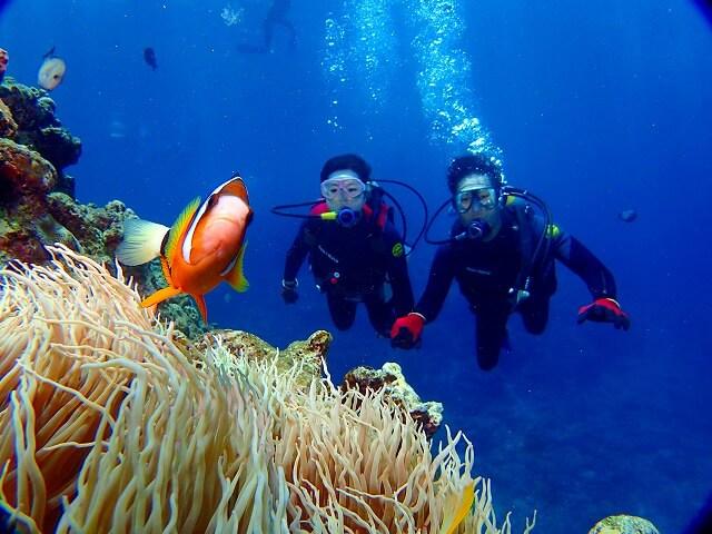 ダイビングで水中生物をいっぱい観察しましょう。