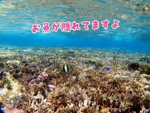 サンゴ礁にお魚がいっぱい