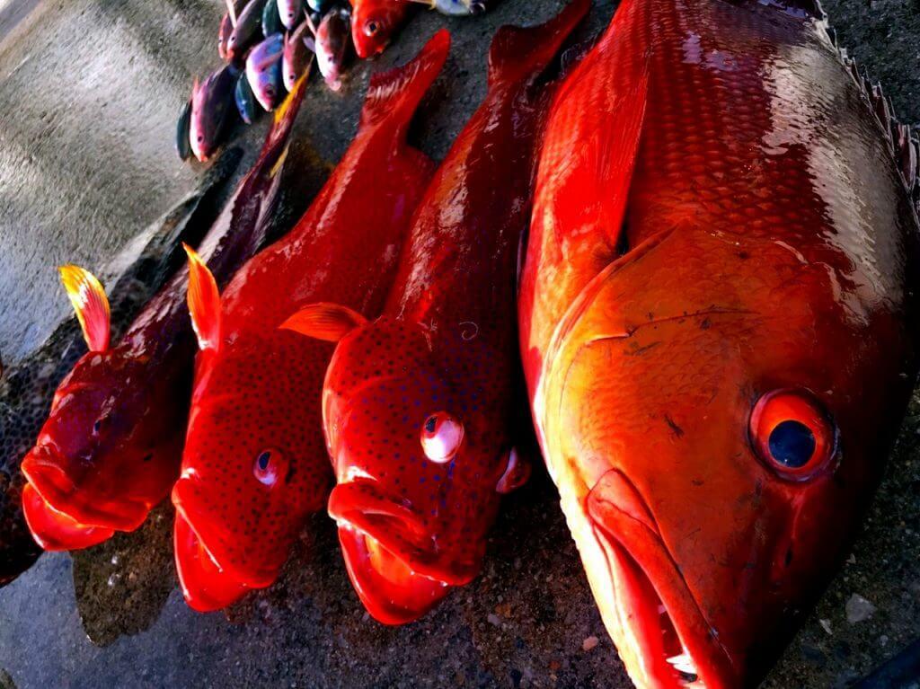 沖縄で泳がせ釣りで大物を釣っている