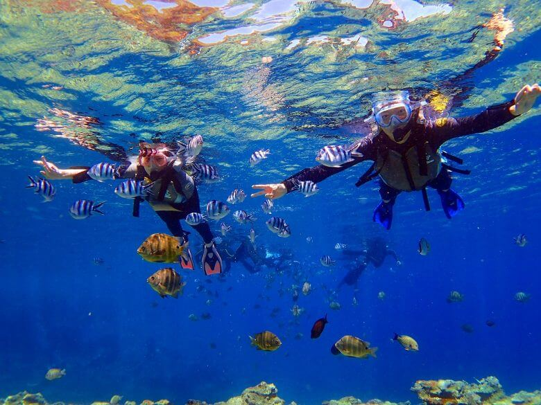 青の洞窟は熱帯魚餌付けも無料で体験できます。