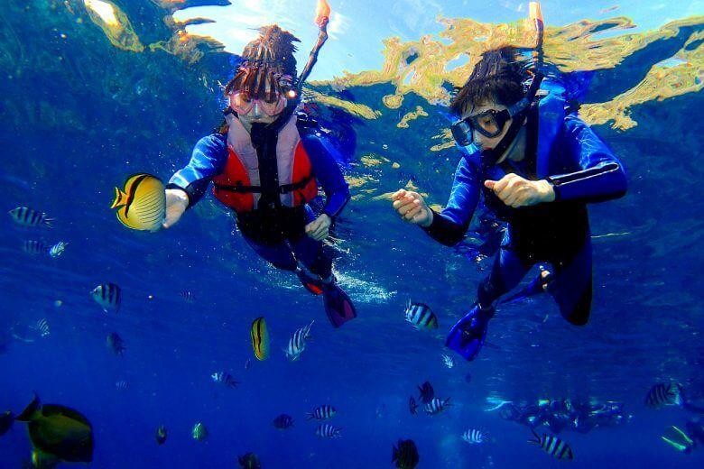 無料特典の熱帯魚餌付け体験