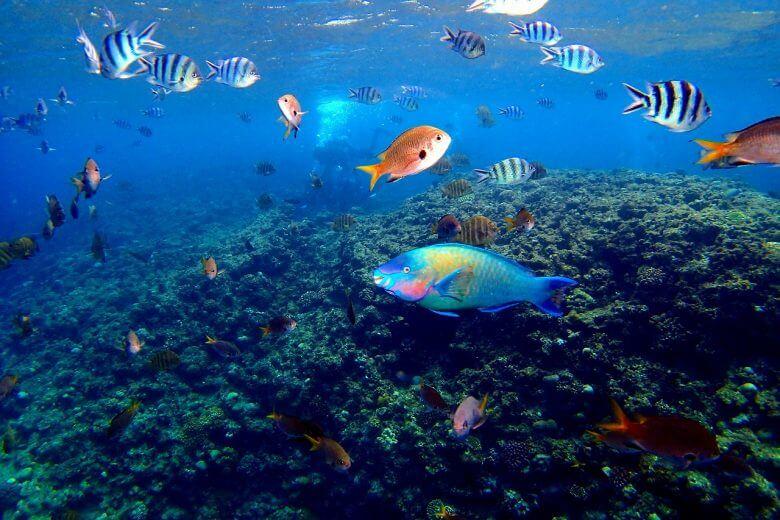 熱帯魚餌付け