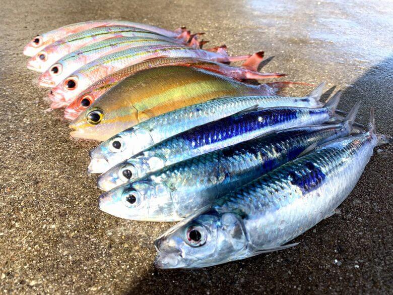 キラキラ光る新鮮なお魚