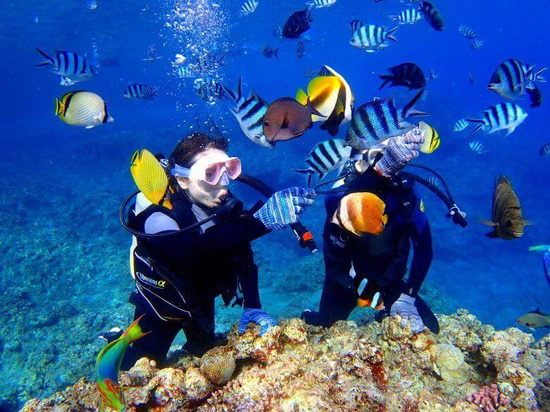 毎日5組限定!青の洞窟ボート体験ダイビング&パラセーリング7