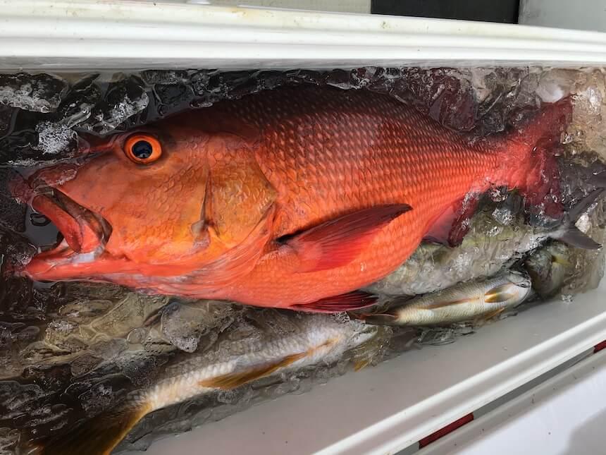 沖縄釣りで大物を釣り上げる