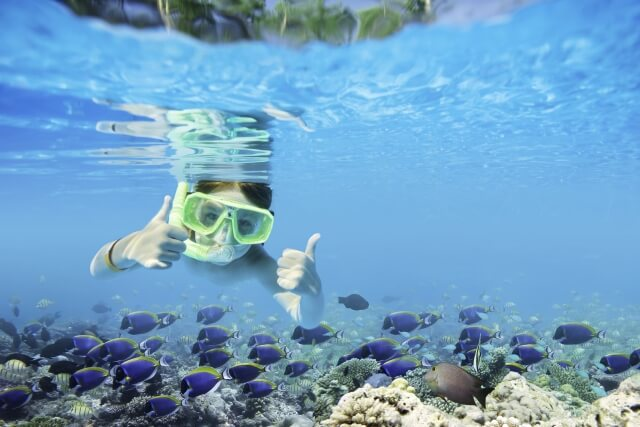 沖縄の海はシュノーケリングで手軽に楽しめます。