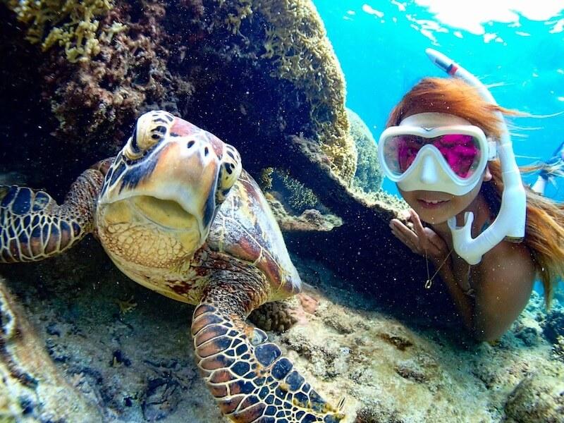 ウミガメアクティビティは沖縄でも大人気