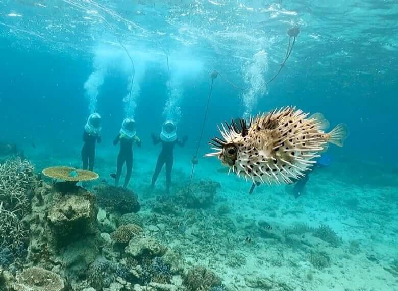 水中を自由に歩ける新体験。