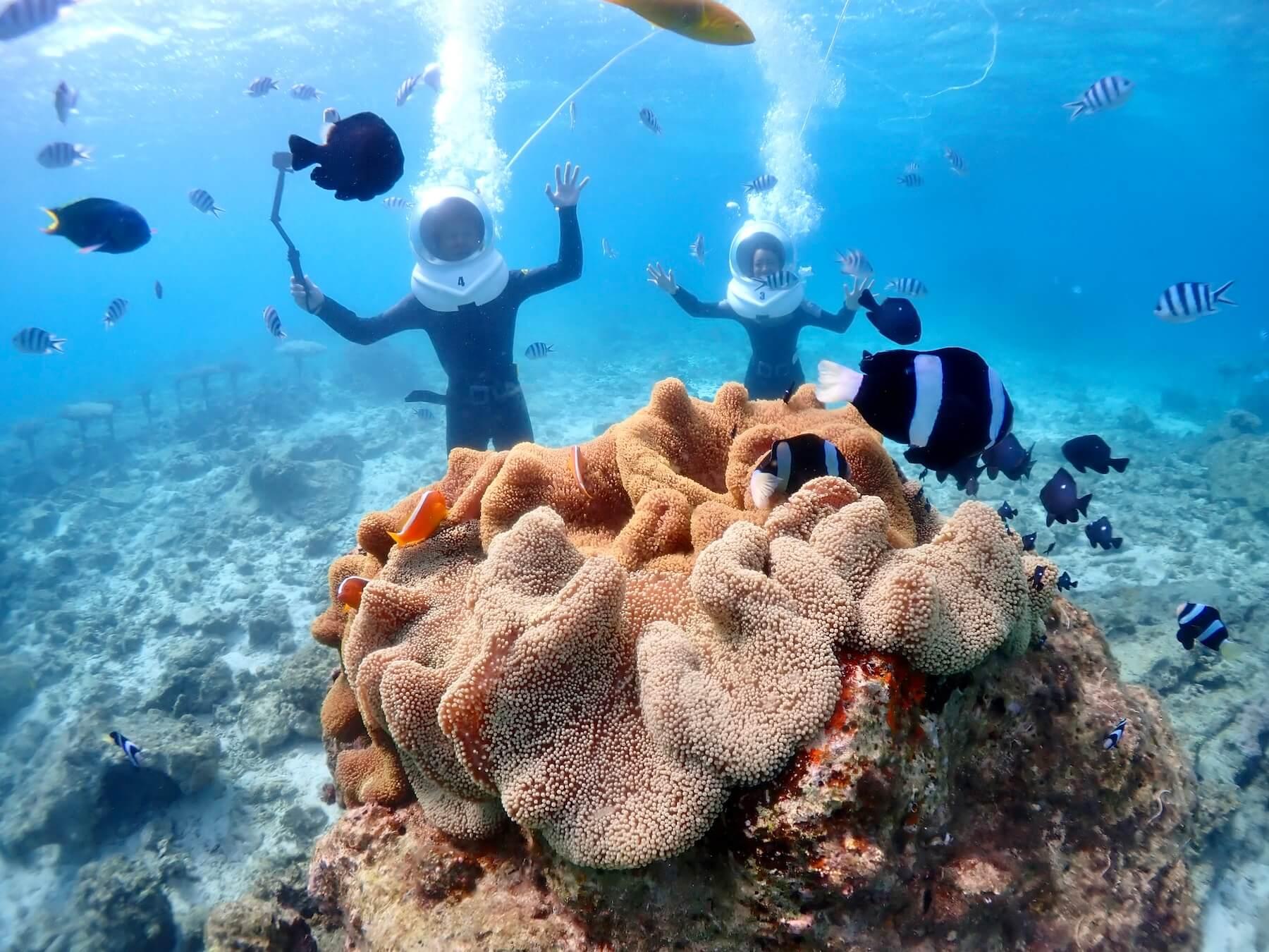 シーウォーク熱帯魚に餌付け体験