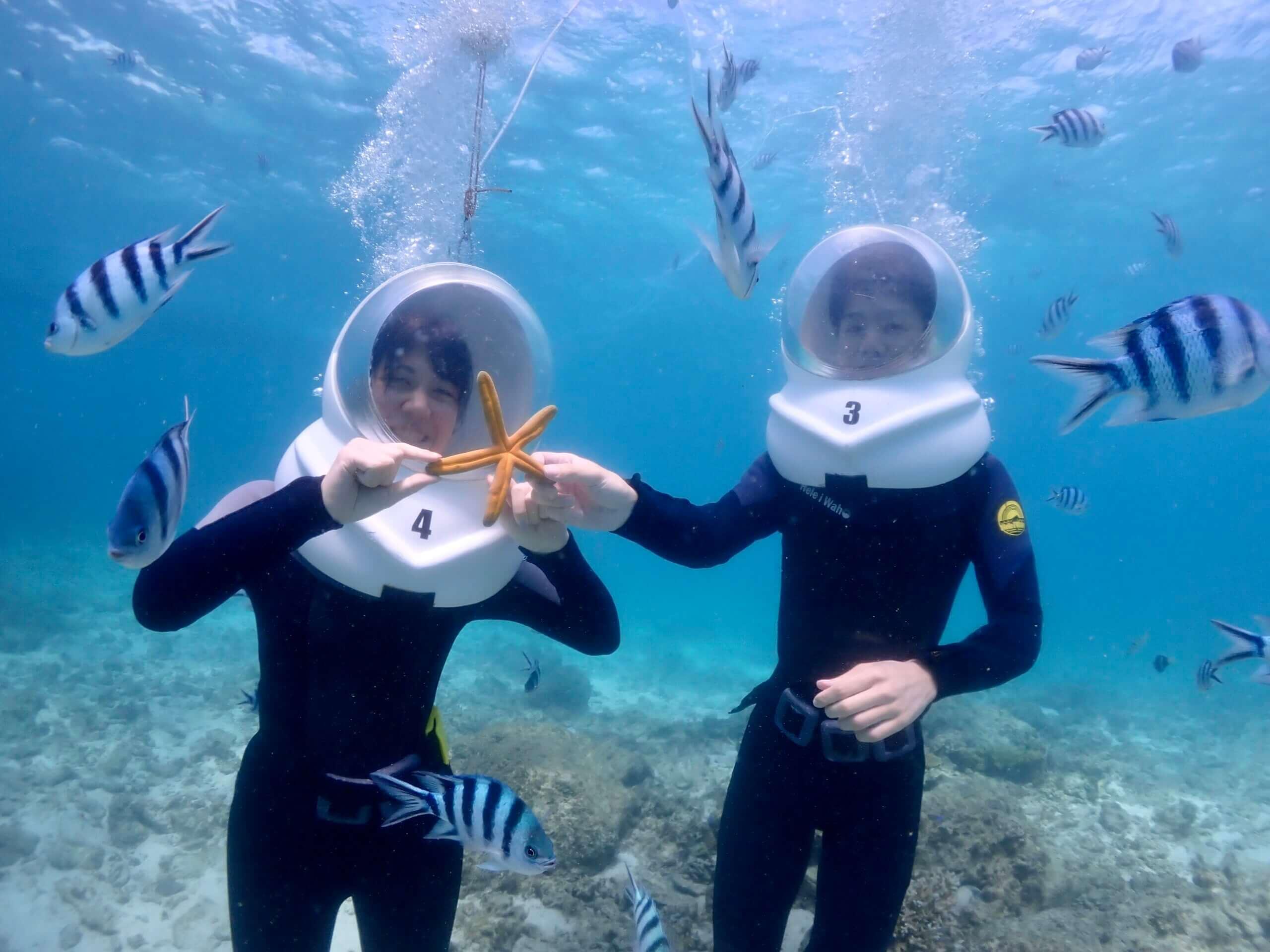 水中生物がいっぱい観察できるシーウォークツアーです。