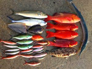 大漁に釣れたお魚の大きさを比べている