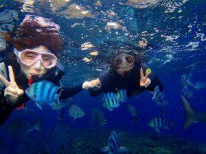 青の洞窟シュノーケリング熱帯魚餌付け