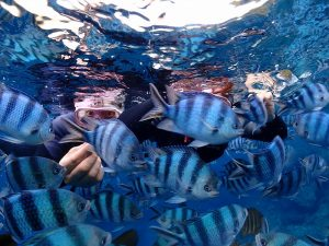 真栄田岬でシュノーケリング魚にえさやり