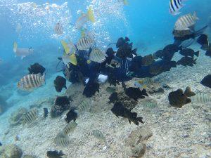沖縄 青の洞窟 魚がたくさん