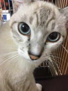 沖縄 青の洞窟 ハイサイドの猫
