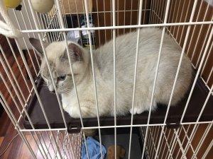 沖縄 猫 ユンボ